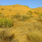 Thar desert near Jaisalmer, Rajasthan, India — Stock Photo #68531771