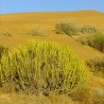 Thar desert near Jaisalmer, Rajasthan, India — Stock Photo #68538711