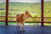 Cow in Cool Shade — Stockfoto