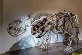 Fossil Exhibit in Royal Tyrrell Museum — Foto de Stock
