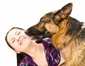 Portrait of a smiling young woman who licks German Shepherd — Stock Photo