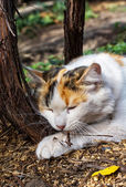 顽皮猫 — 图库照片