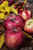 Geerntete äpfel — Stockfoto