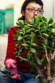 Woman takes care of indoor ornamental plants — Stock Photo
