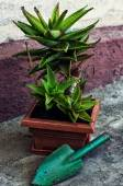 Home decorative potted plant — Stock Photo