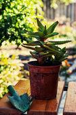 Home decorative potted plant — Stockfoto