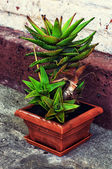 Care home decorative potted plant — Zdjęcie stockowe