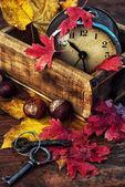 October fall foliage — Stock Photo