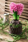 Blossoming flower of hyacinth — Stock Photo