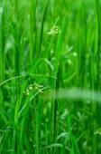 Spring lawn — Stock Photo