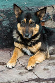 An abandoned dog — Zdjęcie stockowe