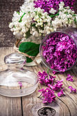 Branches of lilac — Stock Photo