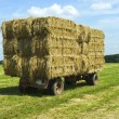 Bales of hay on a trailer standing in a grass field — Stock Photo #55489901