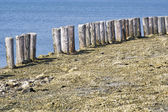 Wooden poles along the waters edge in Zeeland — Stock Photo