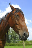 Sympathetic horse leaning over a fence — Stock Photo