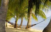 Hammock hanging between palm trees — Stock Photo