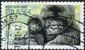 Postage stamp printed in Germany, shows the Mountain gorilla — Stockfoto
