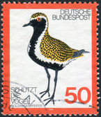 Postage stamp printed in Germany, dedicated to the protection of birds, depicted Golden Plover — Stockfoto