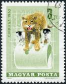 Postage stamp printed in Hungary, is dedicated to Circus, shows Leopard and dogs — Stockfoto