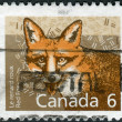 Postage stamp printed in Canada shows the mammal Red Fox — Stock Photo #57682055