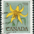 Postage stamp printed in Canada shows flower Canada lily — Stock Photo #57683185