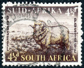 Postage stamp printed in South Africa, shows Merino Ram and Sheep — Stock Photo