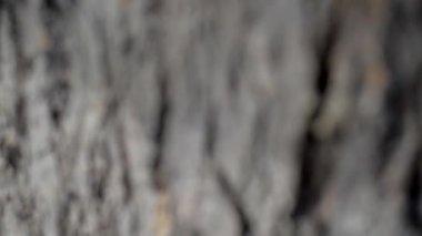 Bark of oak tree. — Stock Video