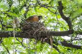Robin's Nest Up a Tree — Foto Stock