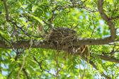 Hnízdo na stromě — Stock fotografie