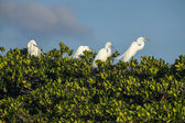 Bird Rookery in Florida Everglades — Stock Photo