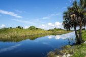 Everglades Florida USA — Stock Photo