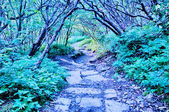Early morning craggy gardens nature on blue ridge parkway — Stock Photo