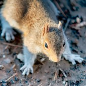 Squirrel sitting on ground — Foto Stock