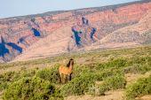 Monument Valley, Arizona çim yeme vahşi at — Stok fotoğraf
