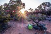 An ancient gnarled juniper tree near Navajo Monument park  utah — Stock Photo