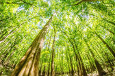 Cypress forest and swamp of Congaree National Park in South Caro — Stock Photo