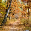 Road in autumn wood. Last days before the frost — Stock Photo #56181535