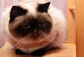 Kitty lies on an armchair — Stock Photo