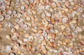 Sand and shells background — Stock Photo