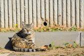 Stray cat sitting on the ground — Stock fotografie
