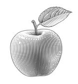 Apple in engraving style — Stock Vector