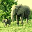 Mother and baby african elephants, Botswana. — Stock Photo #51893619