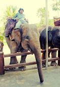 Mahout and elephant at The Elephant Safari Park, Bali — Stock Photo