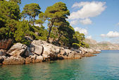 Beautiful summer landscape with turquoise sea and pine tree. Dig — Stock Photo