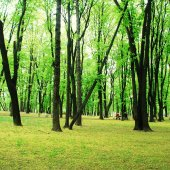 Trees in the green park, spring time — Stock Photo