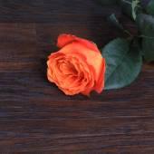 Rosa com espaço de cópia — Foto Stock