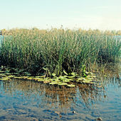 Blue water and reeds on Dnieper River in Kiev — Stock Photo