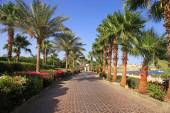 Palm trees and footway, Sharm el Sheikh, Egypt — Stock Photo
