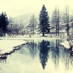 Winter pond — Stock Photo #66554491