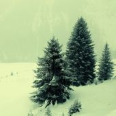 Snowstorm over mountains and spruce trees in winter, Alps, Switz — Stock Photo